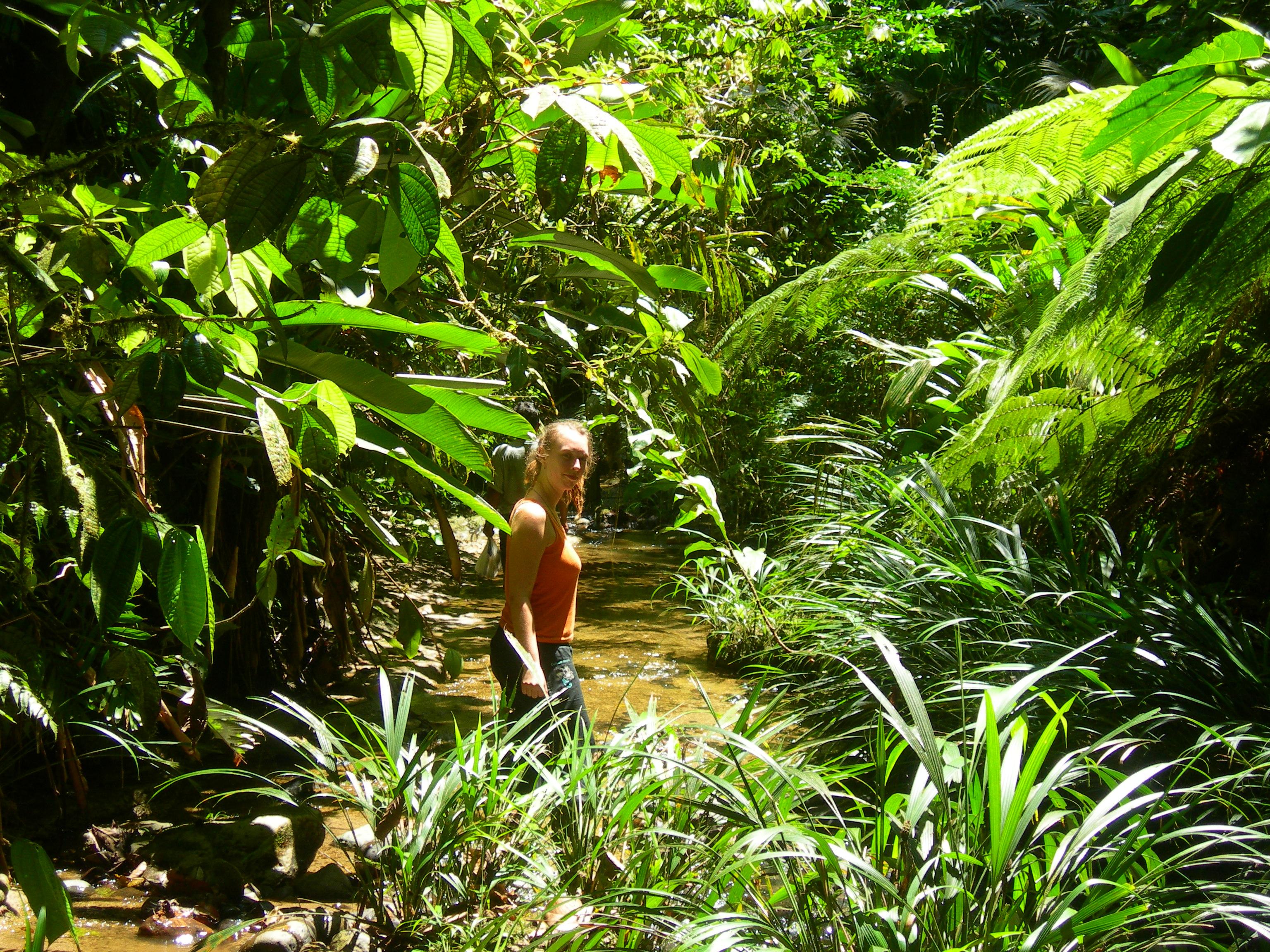 Adieu amazoonico at les babos dans la jungle - Animal qui mange les fourmis ...